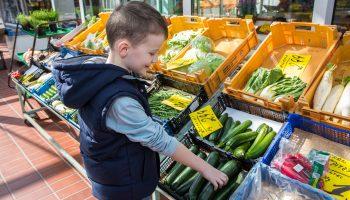 Junge hlt frisches Gemse von der Ernte