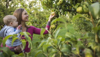 171001_Orchard_Apple Picking_Christine-Ada_0039